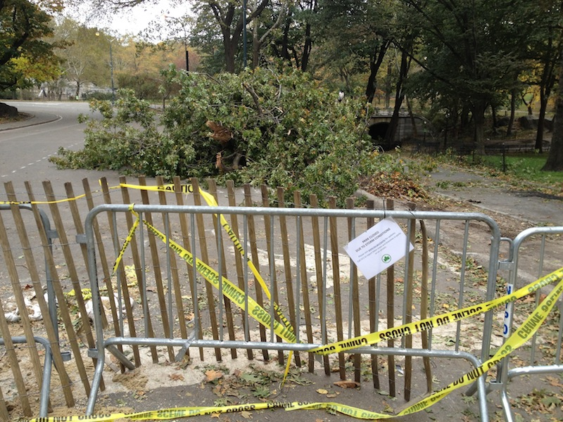 Hurricane Sandy in Central Park